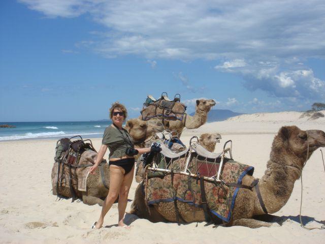 Até camelos encontramos nas praias