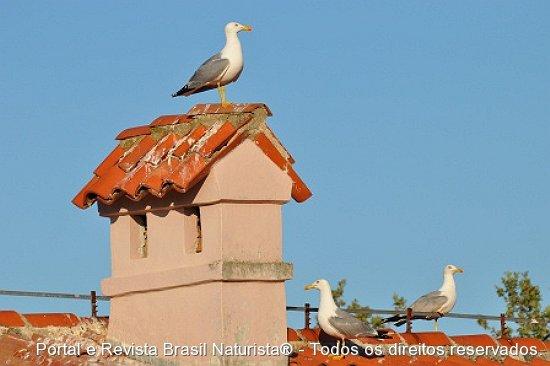 Atobá a ave simbolo da Costa Istria no mar Adriático