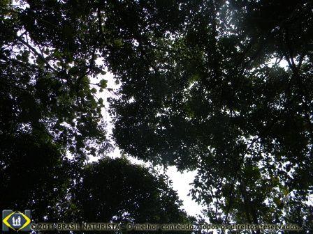 A vista que se tem deitados da copa das árvores