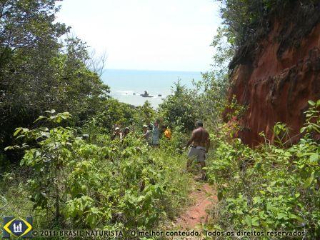 As trilhas das falésias parte do bioma da mata Atlântica rica na biodiversidade do seu ecossistema