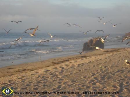 Aves migratórias atraidas pela fartura de alimentos no mar