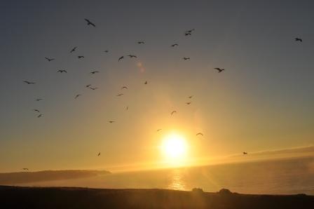 As aves em seu balé circular em torno do sol