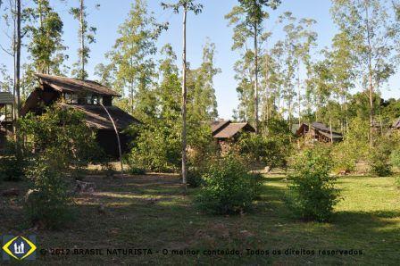 Os eucaliptos brotando ao redor das cabanas
