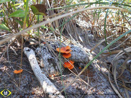 Os fungos da vegetação no nosso caminho