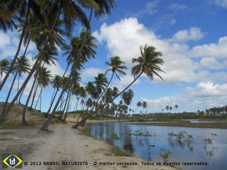 Natureza praticamente intocada de coqueirais