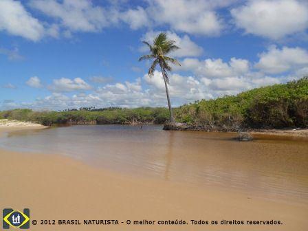 O rio que banha o mangue na sua foz