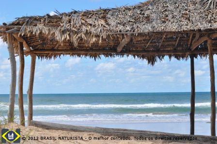 A praia emoldurada pelo cobertura das folhas secas dos coqueiros