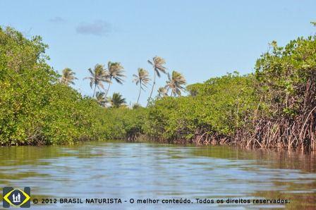 Manguezal na foz do rio Massarandupió