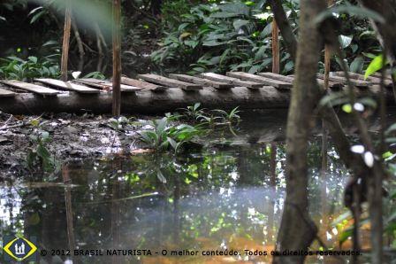 O rio que corta as trilhas por dentro do mato