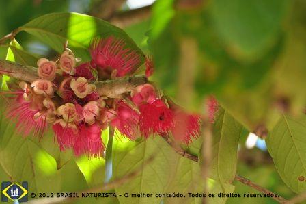 Flores dos frutos da região