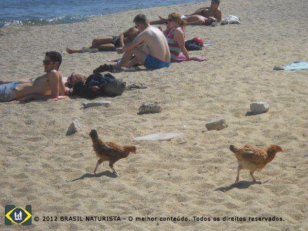 Até a visita inusitada de algumas galinhas na praia chamou a atenção...