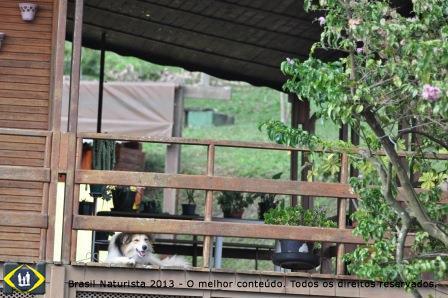 Vamos deixar para trás o cão que nos olha protegido na área externa da cabana...