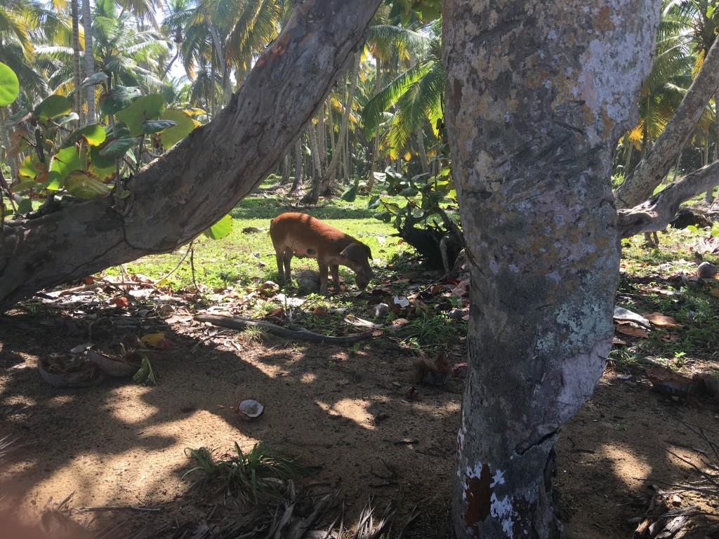 Vários deles se aproximando do lugar onde eu estava descansando.