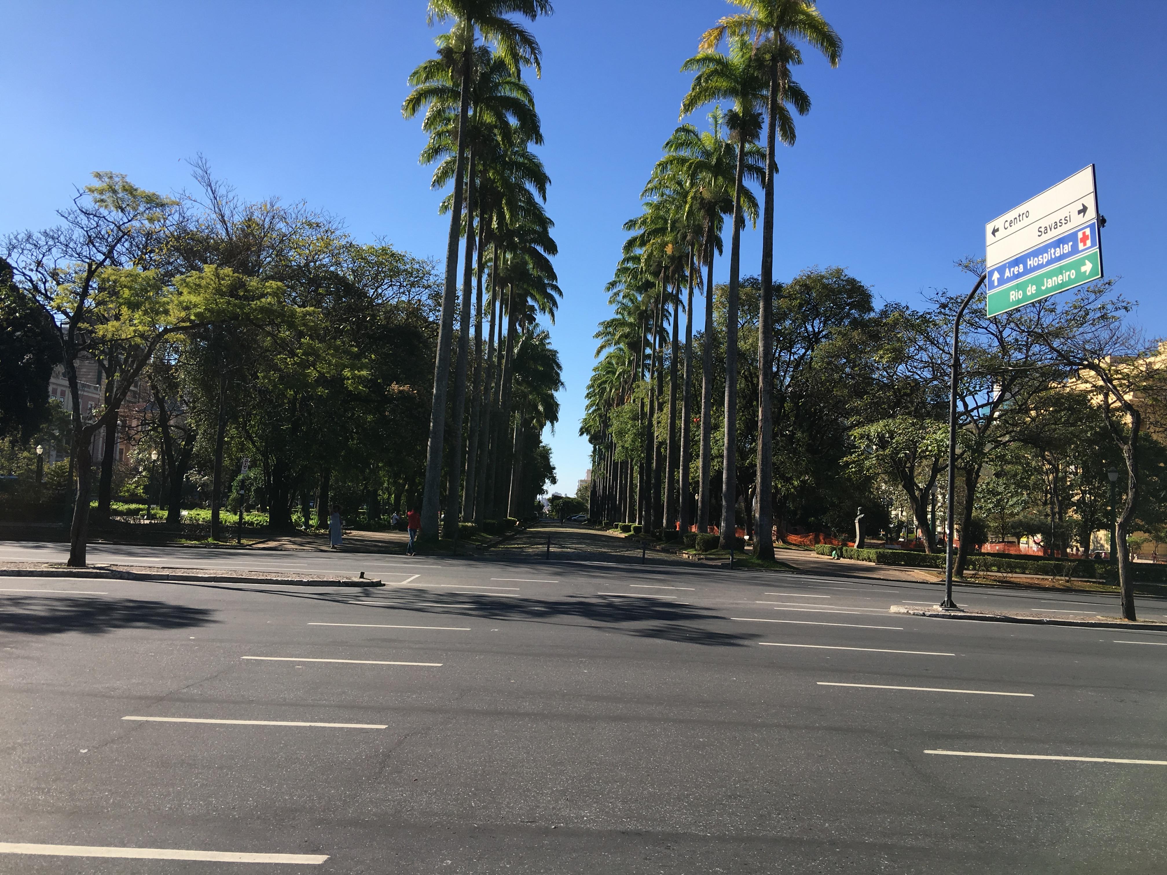 Palmeiras imperiais da Praça da Liberdade